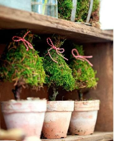Home decorating ideas: Moss trees