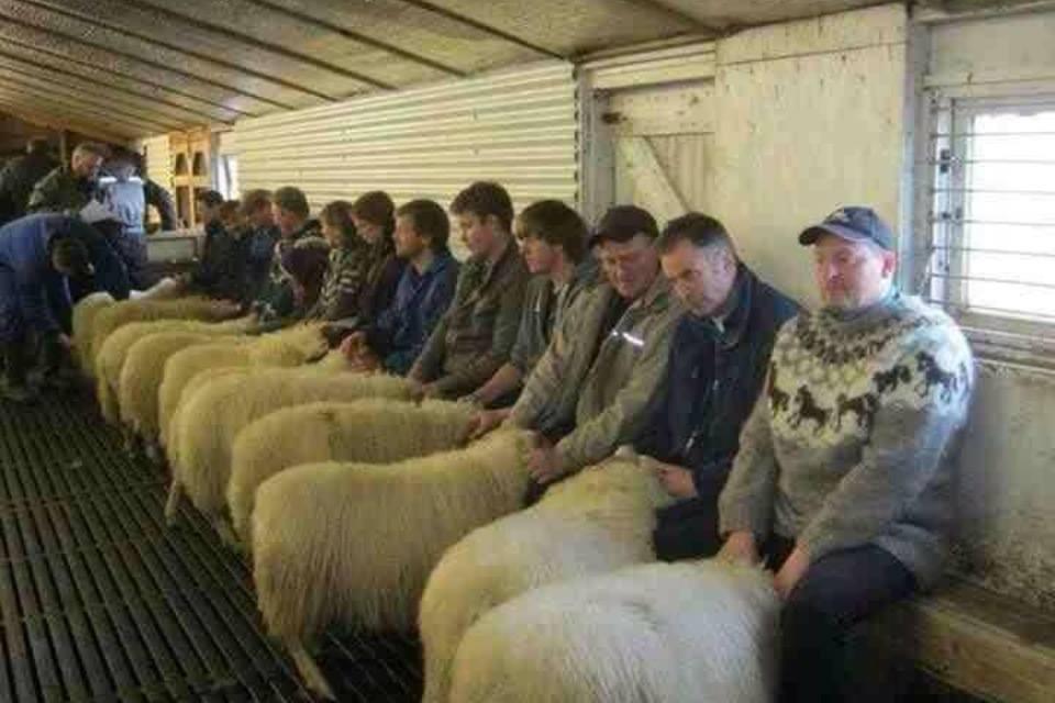 http://4.bp.blogspot.com/-cYMtUR11gQE/UjEottfuFpI/AAAAAAAACC0/36ispqPBJzQ/s1600/welsh+sheep.jpg