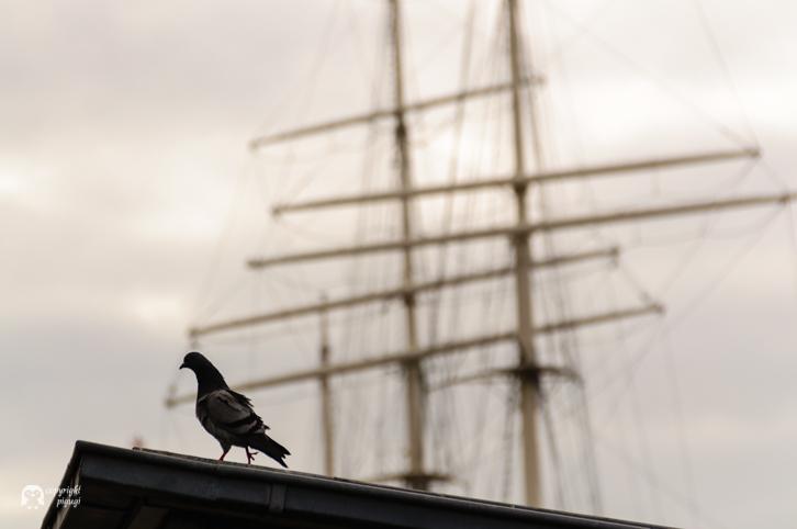 Hafen Hamburg Segelschiff