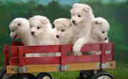 dog backgrounds