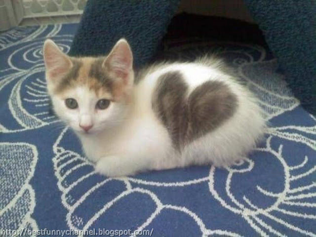 Kitten heart.