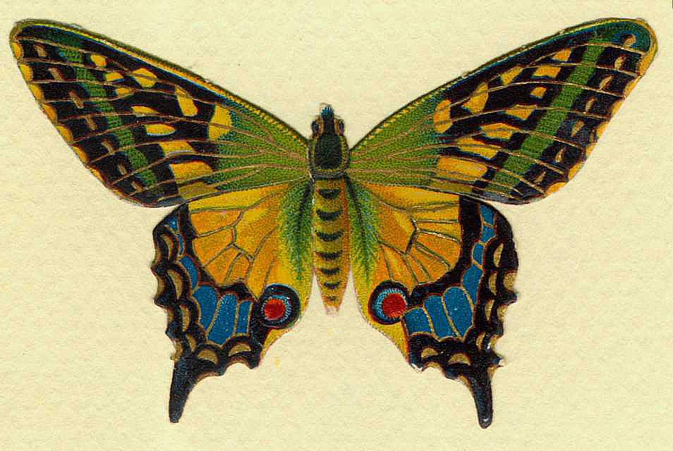 free vintage butterfly clipart - photo #18