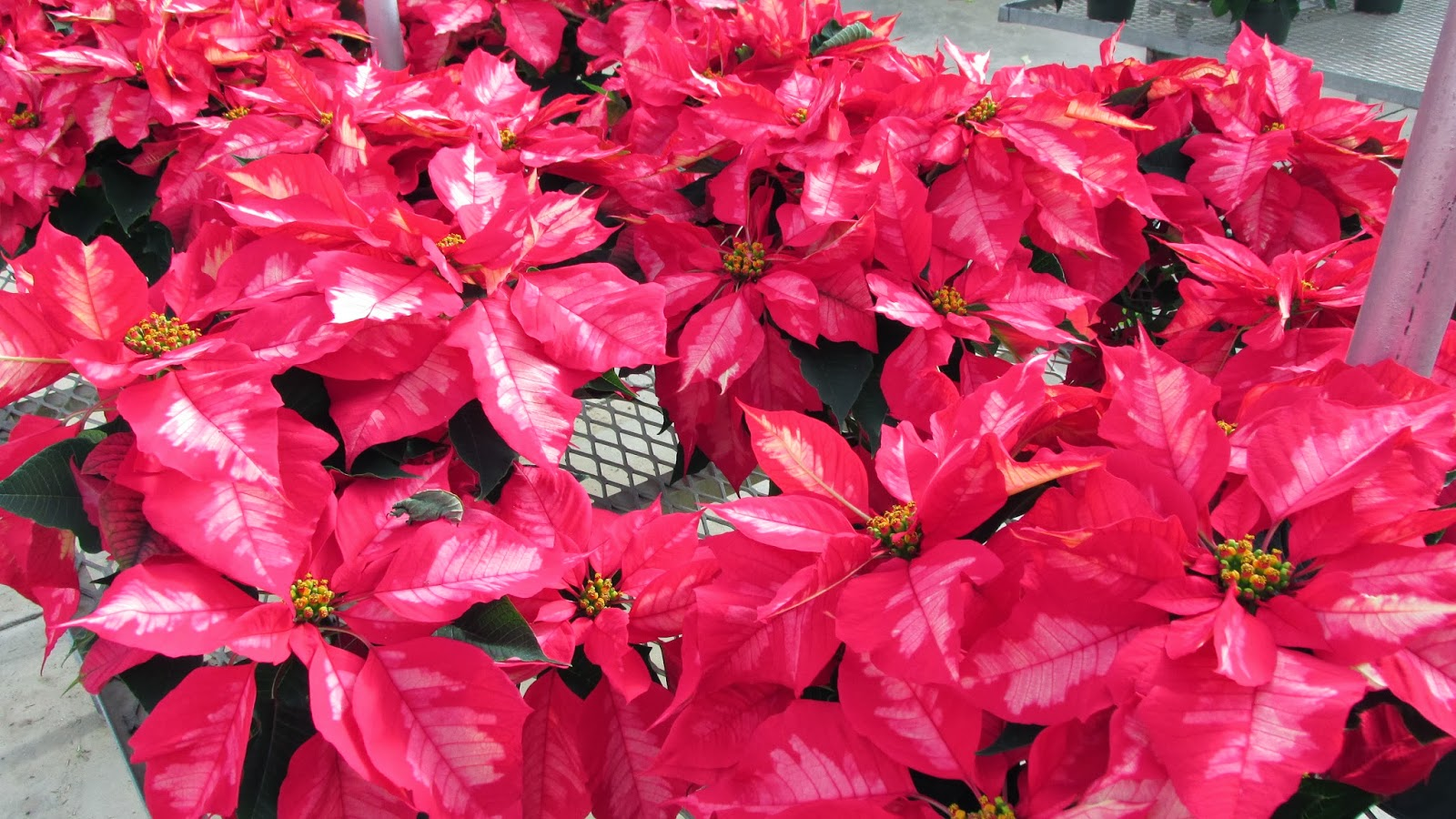 Tagawa Gardens Holiday Plant Care 101