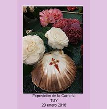 Exposición Camelia en Tuy