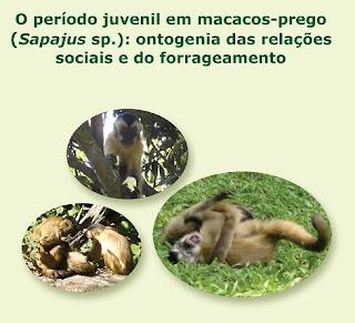 capa dissertação de mestrado O período juvenil em macacos-prego (Sapajus sp.): ontogenia das relações sociais e do forrageamento