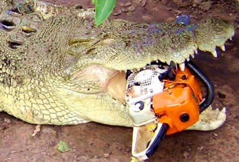 Animal Obsessed : Never Smile at a Crocodile, Except the Saltwater ...