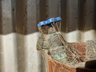 Kukulcania arizonica Web