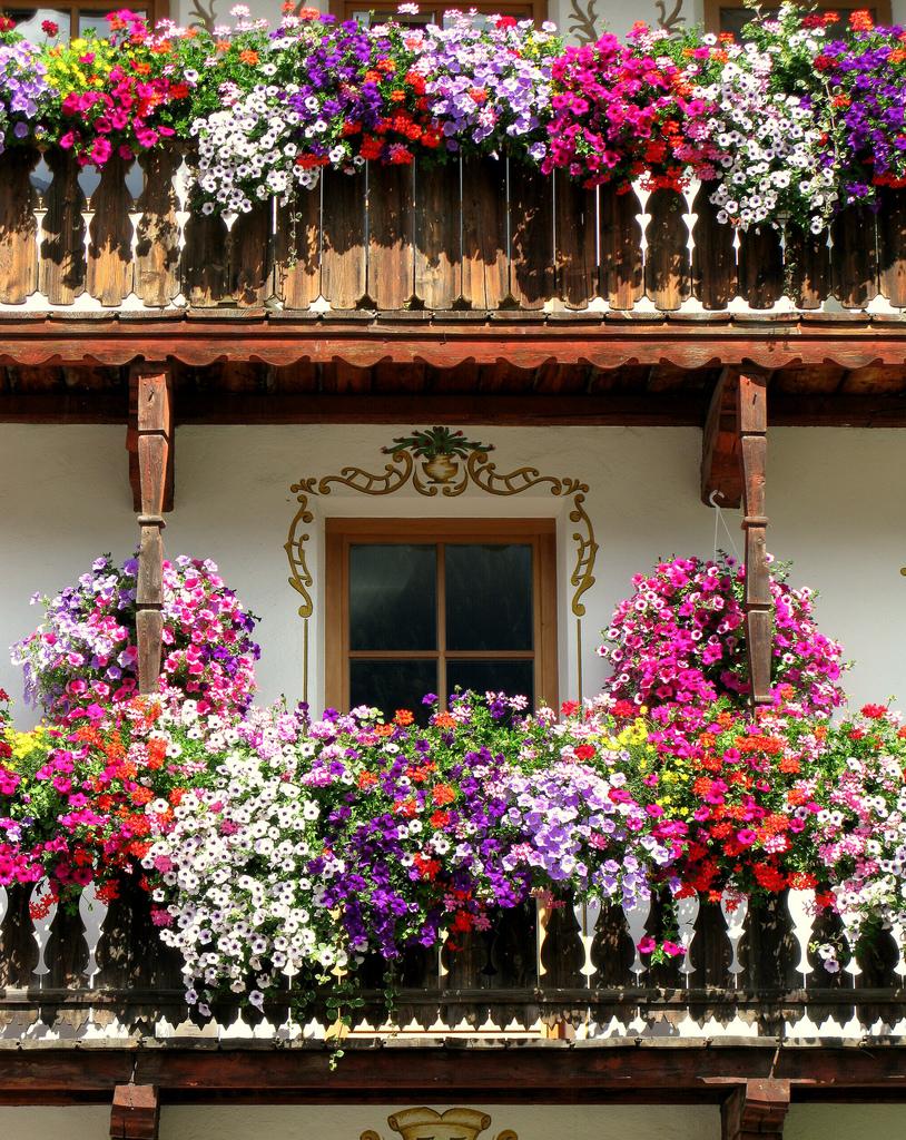 camı kırık eski evler önünde çiçekler ile ilgili görsel sonucu