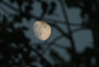 The moon through the linden tree branches
