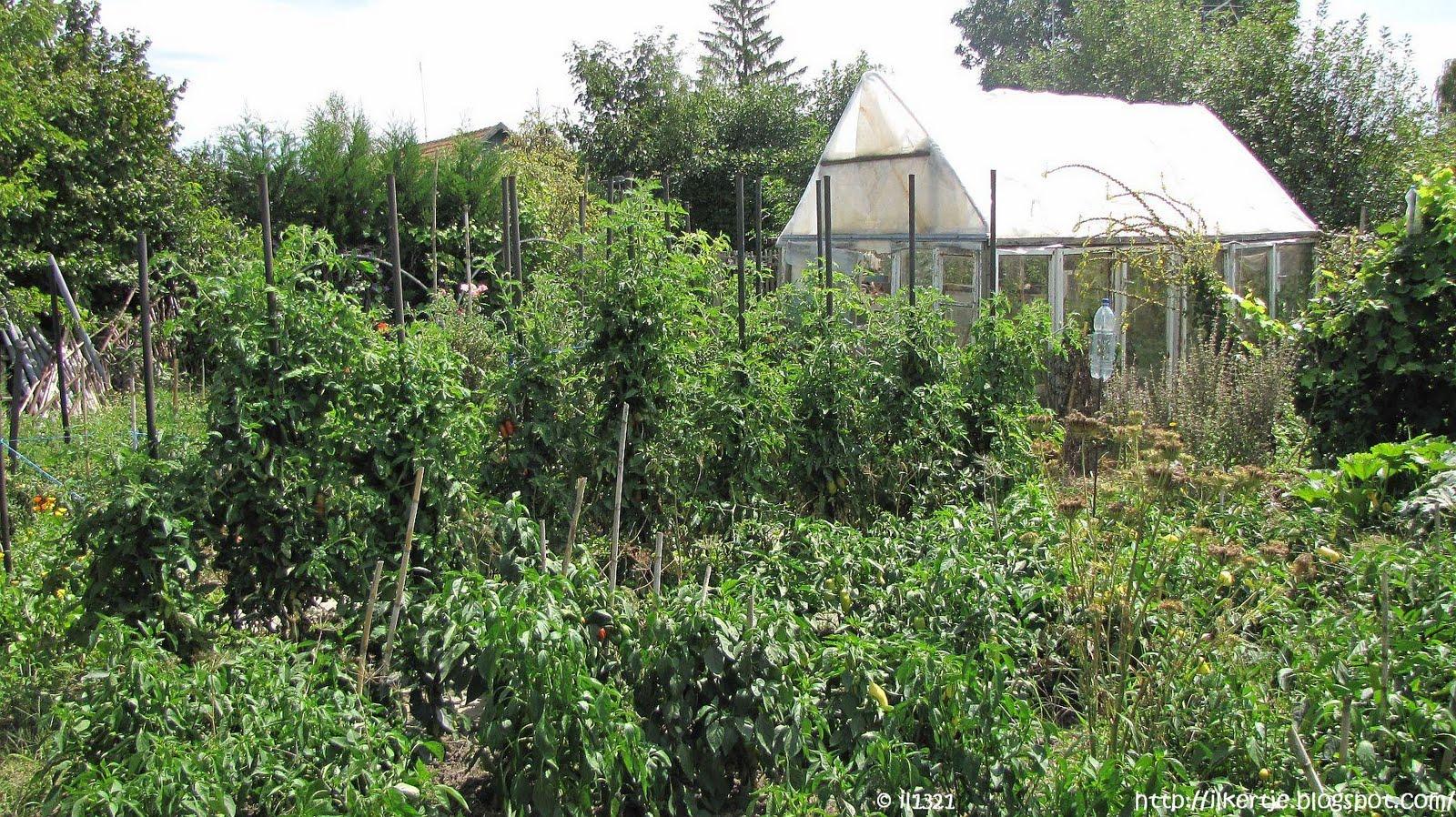 A(z) 11 legjobb kép a(z) zöldség-gyümölcs táblán   Evo ...