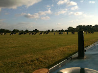 Lechlade Cowfield
