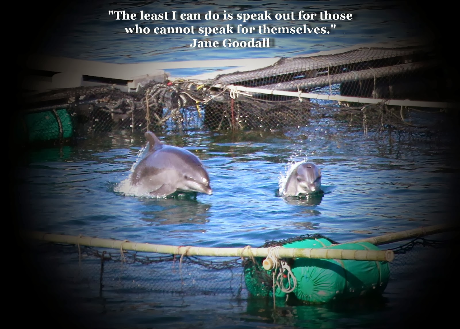 dolphins in captivity essay Debunking captivity: ever written a formal essay excuses for why we should keep dolphins in captivity dolphins are socially oriented and there.