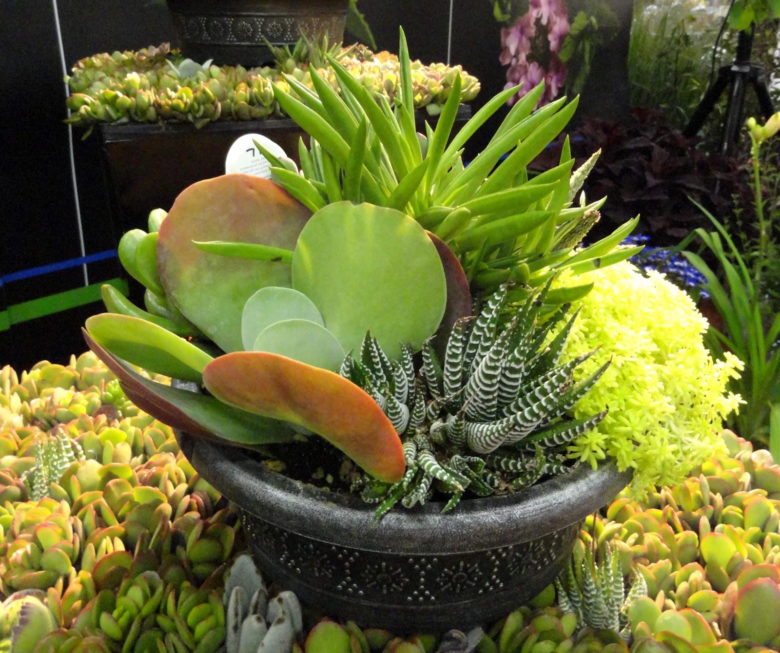 how to get vibrant succylent plants