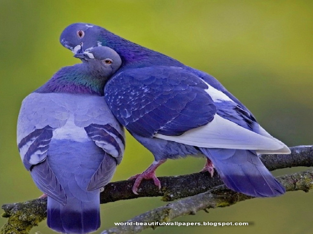 """pigeon gay singles Who are the love in the countryside singles christine  """"i'm 25 hours away from the nearest gay  his interests are clay pigeon shooting, playing and."""