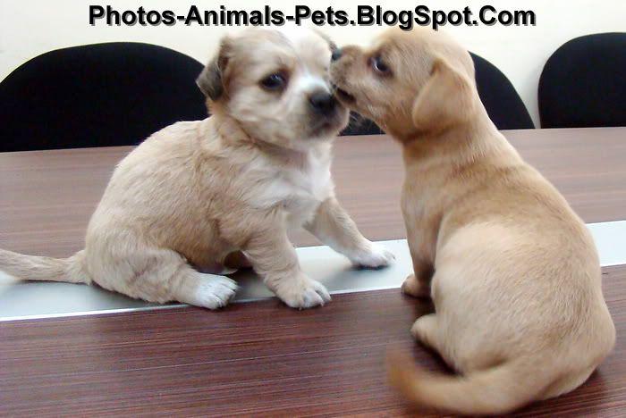 http://4.bp.blogspot.com/-cbVQjqw7NGM/Th09A-7ZpJI/AAAAAAAABqg/V2OiLYzBFrE/s1600/cute%2Bpuppies_0002.jpg