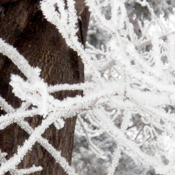 Frost Covered Branches and Tree Bark - Snow Photograph