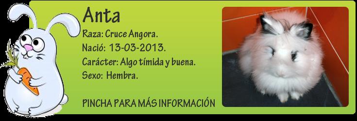 http://mirada-animal-toledo.blogspot.com.es/2013/05/antares-pequeno-peludo-en-adopcion.html