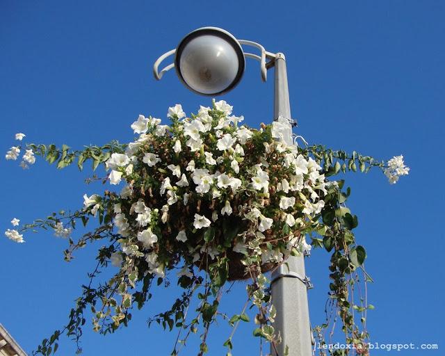 cvijece na rasvjetnim stupovima