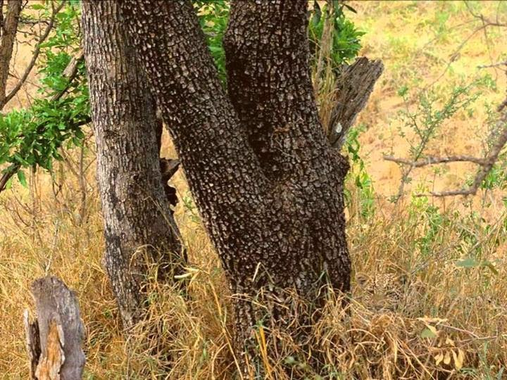 When you see a Leopard in this picture don't tell where, just hit the share button.
