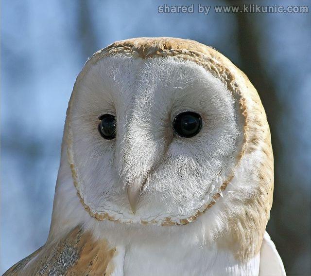 http://4.bp.blogspot.com/-cc88Dsg12Jo/TXXbpmOqKCI/AAAAAAAAQbI/t5xus5ShtbU/s1600/these_funny_animals_632_640_27.jpg