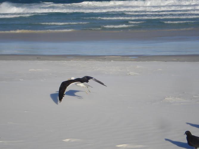 voar...viajar sempre