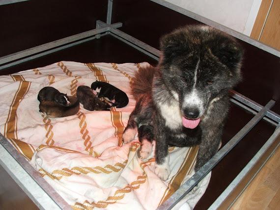 Apache et ses bébés de 4 jours