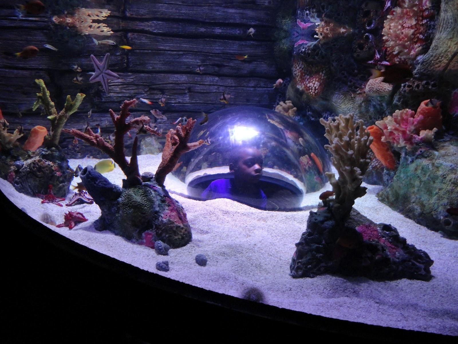 Tropical Fish Kansas City Bj Travels Kansas City