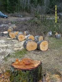 Pihapuut polttopuukokoon kaataen karsien ja pöllikokoon laittaen käteismaksulla Pirkanmaalla