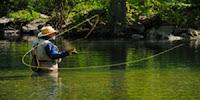 Mušičarenje Fly+fishing