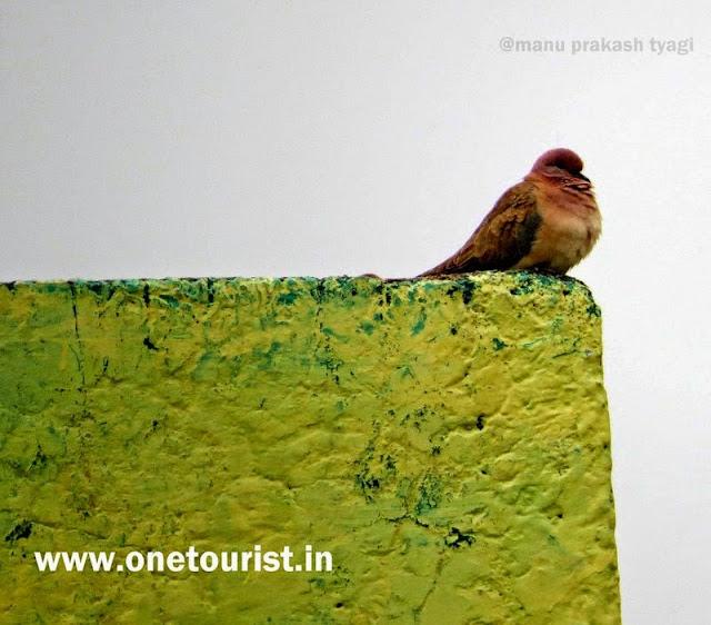 bharatpur bird sanctuary ,ghana , rajasthan , केवलादेव नेशनल पार्क , घाना , राजस्थान