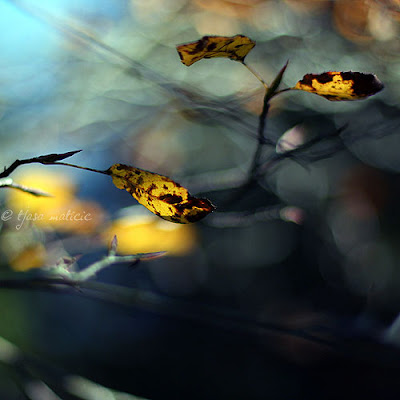 Poetic Photography of Tjasa Maticic's Zen World Seen On www.coolpicturegallery.us