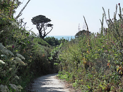 Track leading to Polridmouth, Cornwall