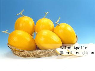 Jual Melon Apollo