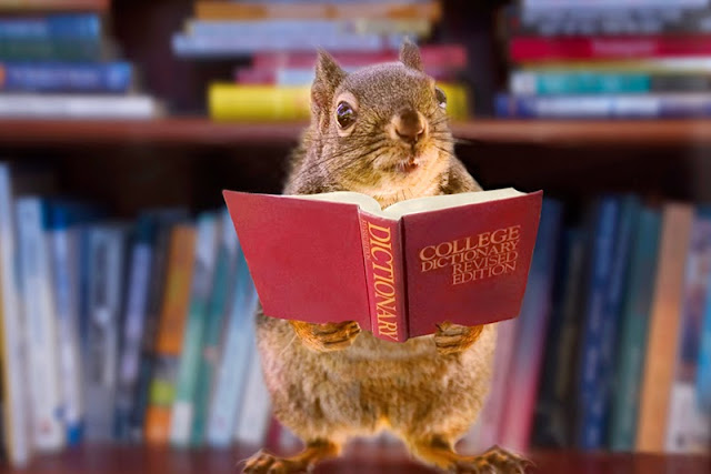 squirrels, books, library, dictionary