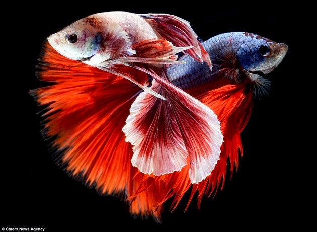 mind-blowing-creatures-3