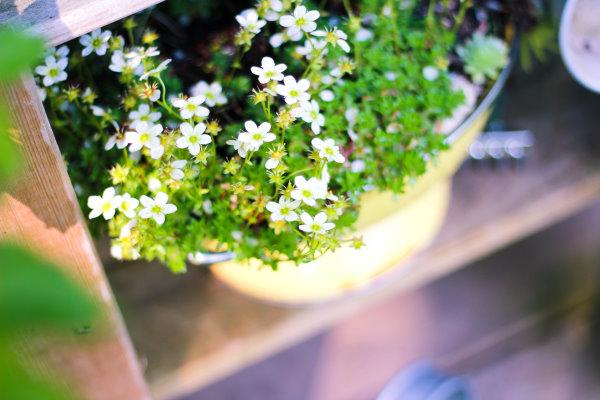 Upcycling Blumentopf aus altem küchensieb