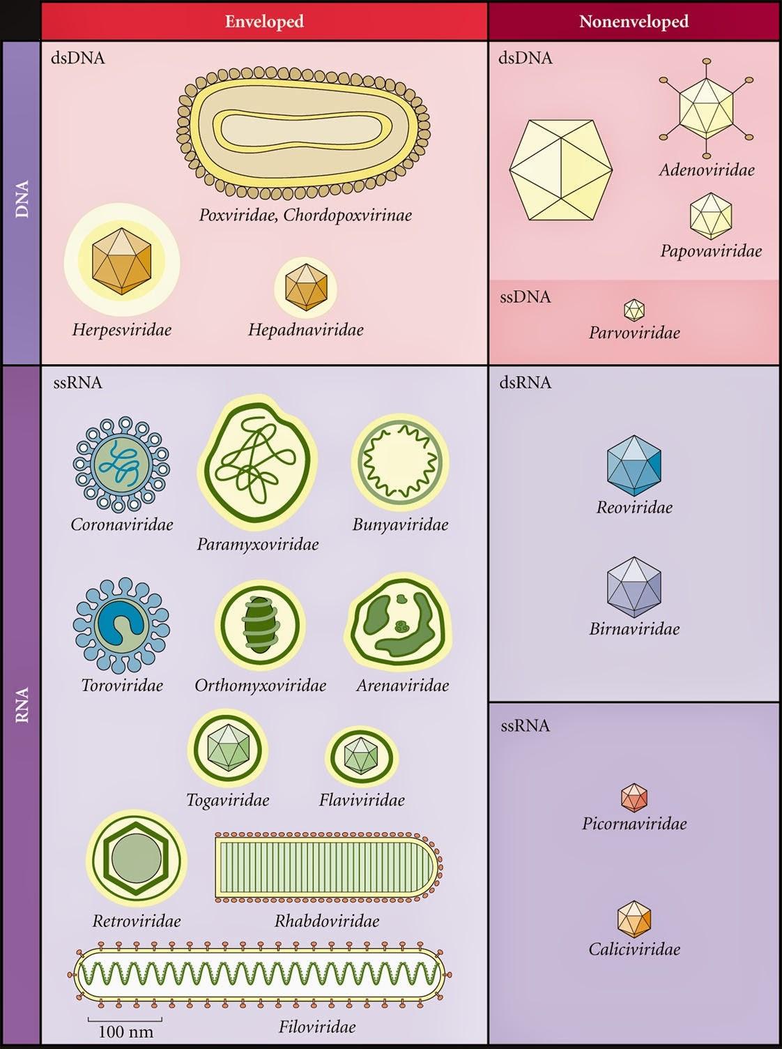 medical laboratory and biomedical science  virus