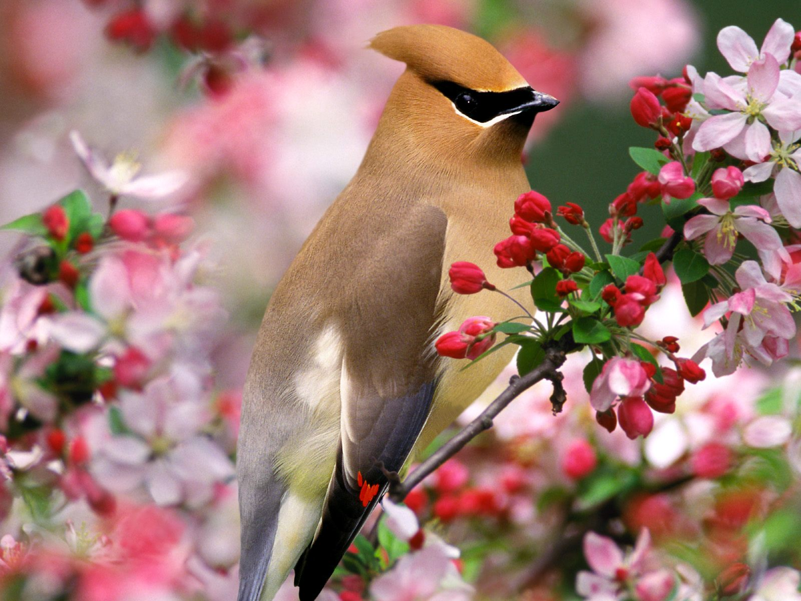 Lovely Small Birds Wallpapers Entertainment Only