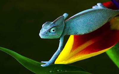 ảnh đẹp các loài động vật, ảnh đẹp thằn lằn, ảnh đẹp thạch sùng, anmhr đẹp kì nhông, hình ảnh bò sát đẹp, ảnh đẹp, ảnh đẹp thiên nhiên chọn lọc, hình ảnh các loài động vật,