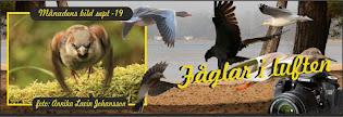 Fåglar i Luften (facebook)