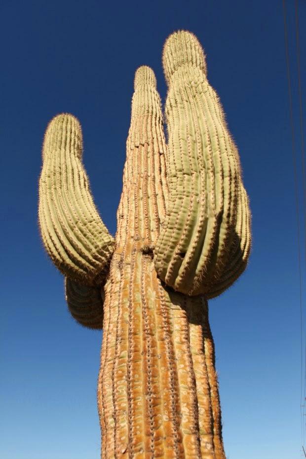 Scottsdale Arizona, Tanvii.com