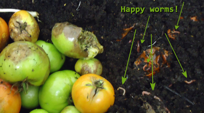 worm wigwam