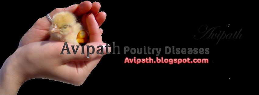 Avipath