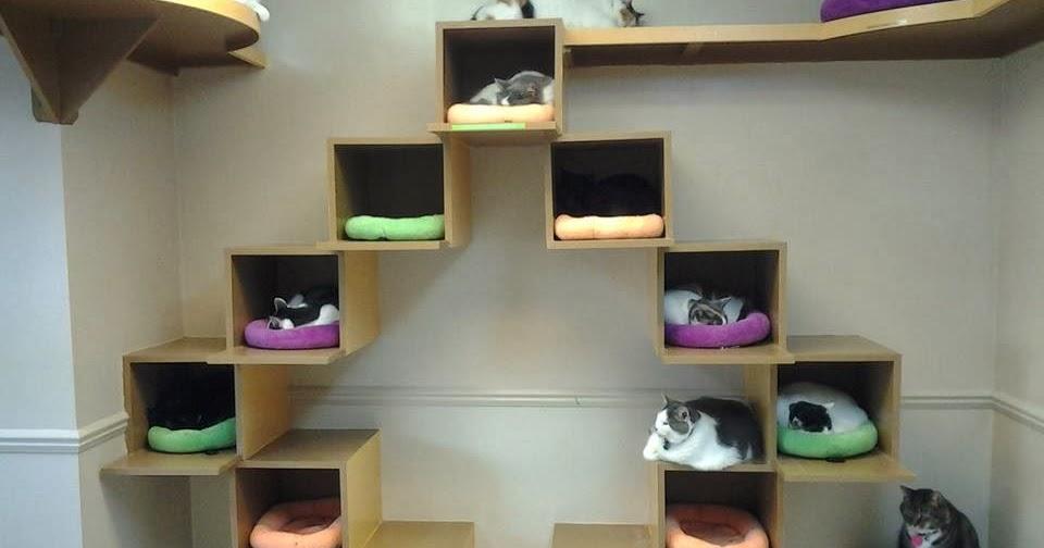 Vita da gatto parete attrezzata con gatti for Parete attrezzata gatti