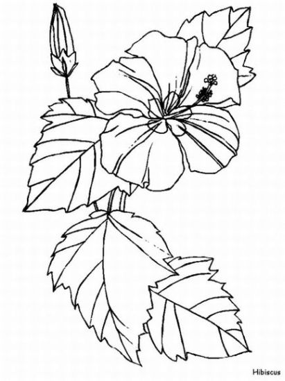 Hibiscus Coloring Pages And Printables