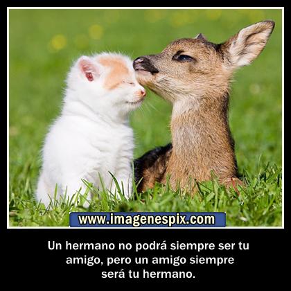 Imágenes de Amor - Imagenes Bonitas - Frases y Fotos