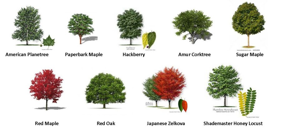 55 TREES: TYPES OF TREES