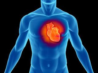 Inilah Fakta Unik Tentang Jantung