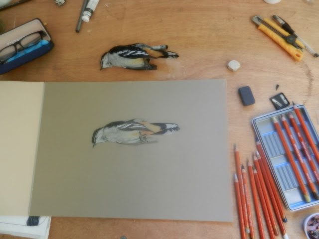 drawing a dead bird