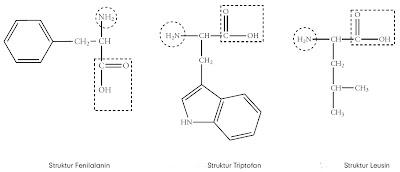 Fenilalanin Triptofan Leusin